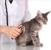 Ветеринарные клиники в Урене